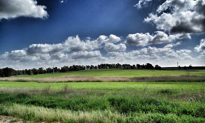 Tree road skies grass green royalty free stock photography