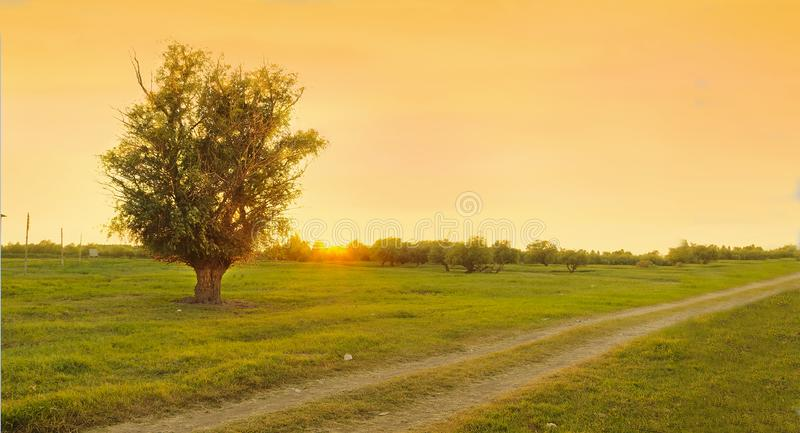 A tree by the road. royalty free stock image