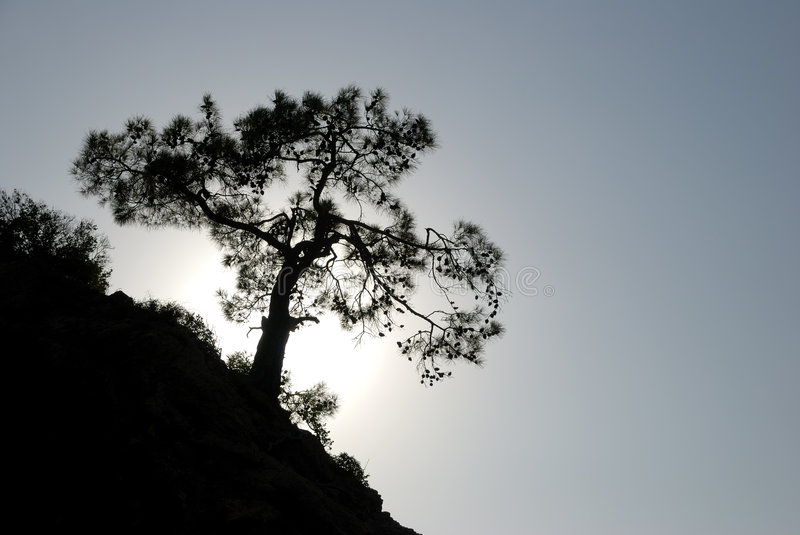 Download Tree on the Rock stock photo. Image of full, rock, alone - 6720242