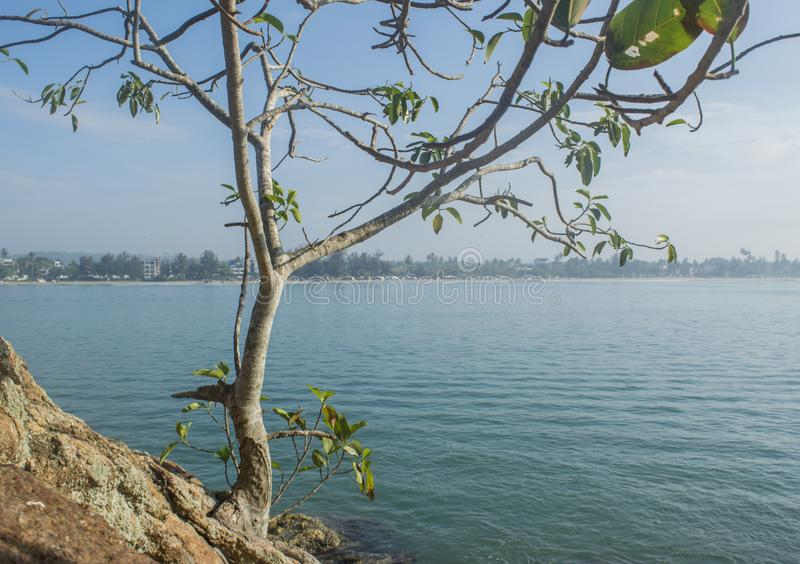 Tree on the rock at the beautiful tropical beach located at the island in ocean royalty free stock image