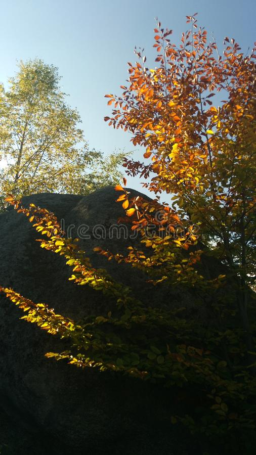 Tree and rock royalty free stock photography