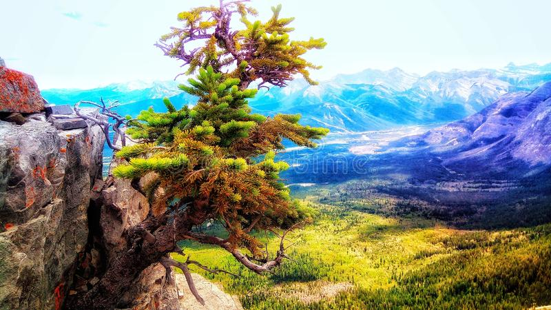 Tree from the rocks royalty free stock photo