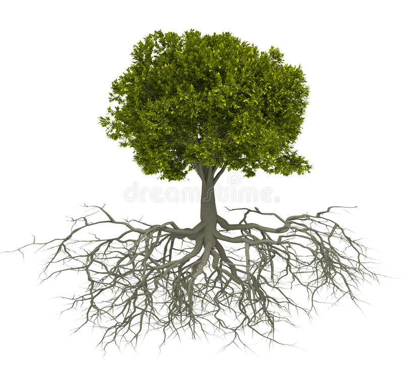 Tree and root stock illustration