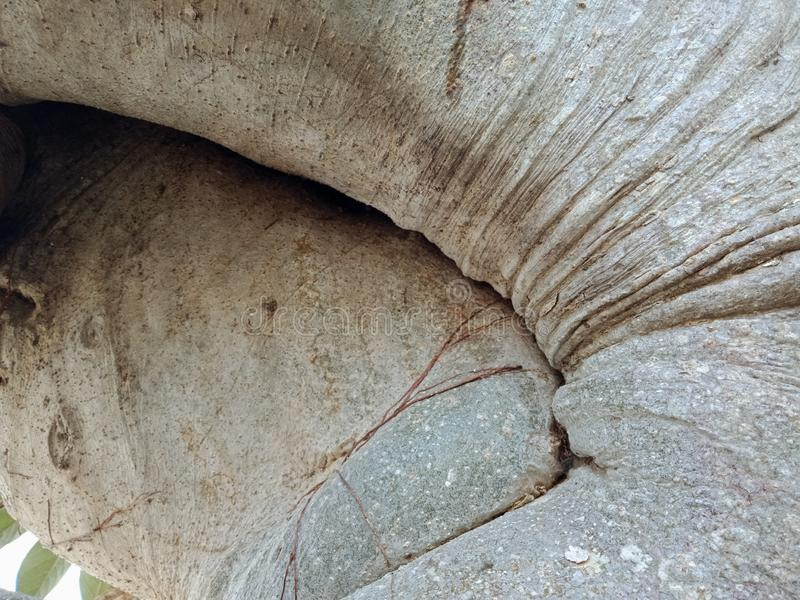Tree root bark texture, nature creation background wallpaper. stock photos