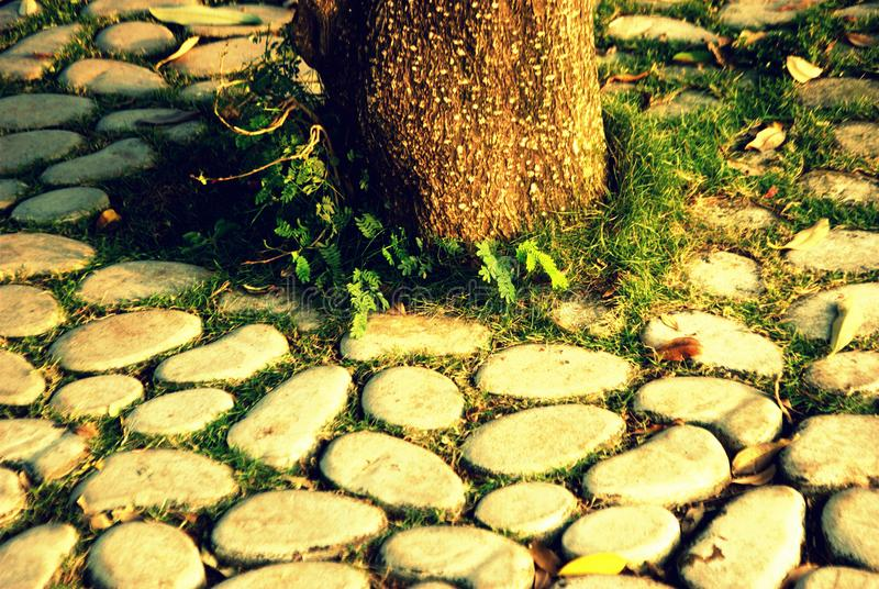 Tree root with stone. It shows a memorable moment, it`s a park in Seawoods Navi Mumbai India. I click this pic because I felt this is a great scene to capture as royalty free stock photography