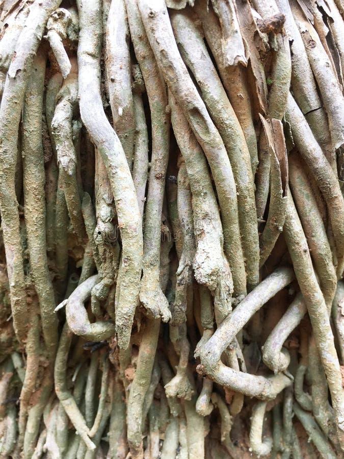 Tree root texture stock image