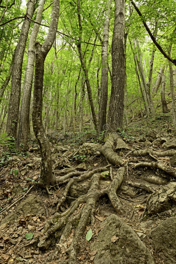 Download Tree roots stock image. Image of nature, environment - 25357855