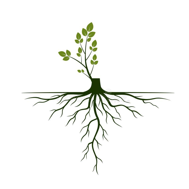 Free Tree Roots And Germinate Limb. Roots Of Plants. Vector Illustration Stock Photos - 136271963