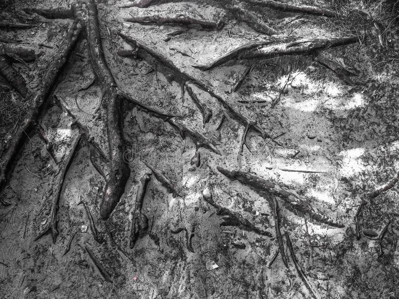 Download Tree roots background stock photo. Image of background - 42482132
