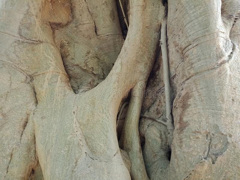 Tree bark texture. Tree roots bark texture, nature creation background wallpaper. many uses for advertising, book page, paintings, printing, mobile backgrounds stock photo