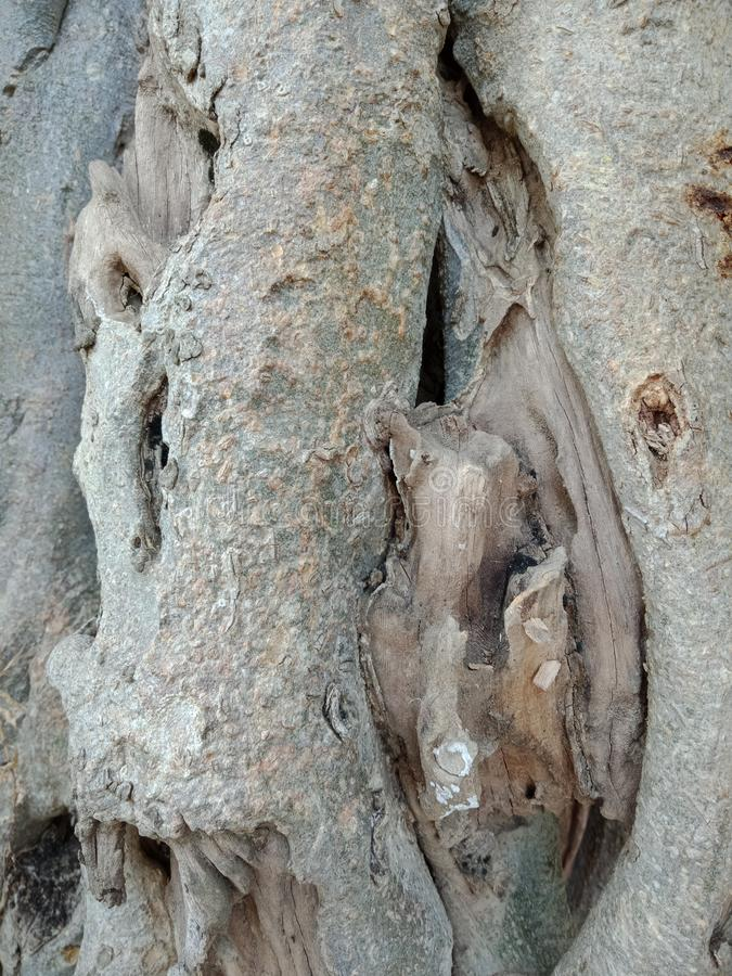 Tree bark texture. Tree roots bark texture, nature creation background wallpaper. many uses for advertising, book page, paintings, printing, mobile backgrounds royalty free stock photos