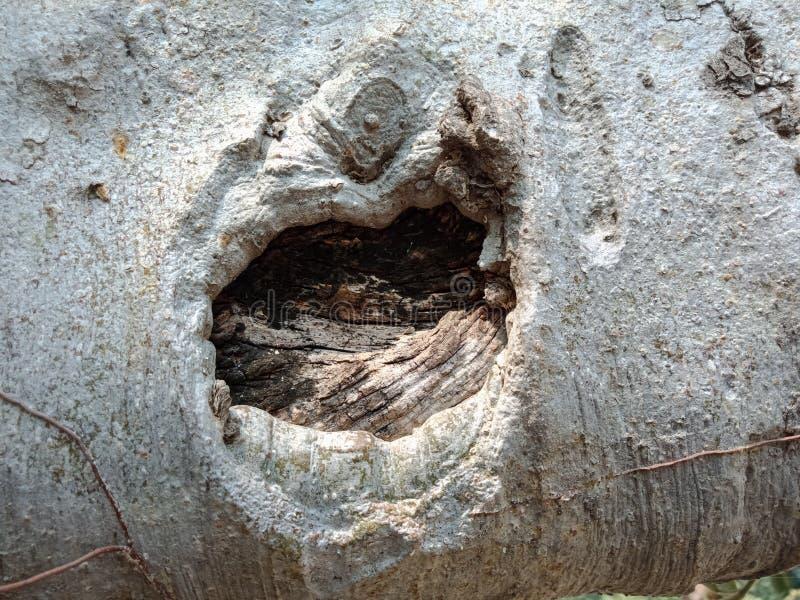 Tree roots bark royalty free stock image