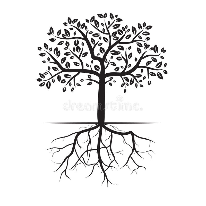 Tree roots royalty free stock photos