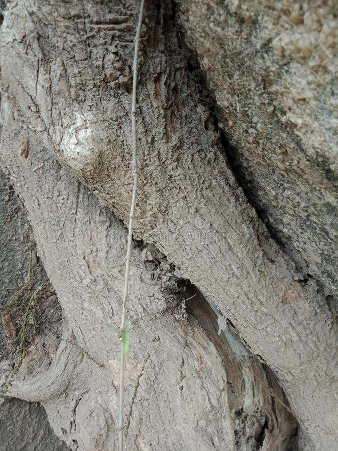 Tree bark texture. Tree roots grown over large rock, tree roots bark texture, nature creation background wallpaper. many uses for advertising, book page stock image