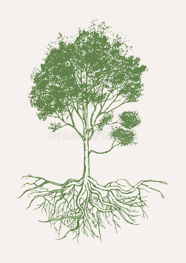 Tree with roots hand drawn vector. stock images