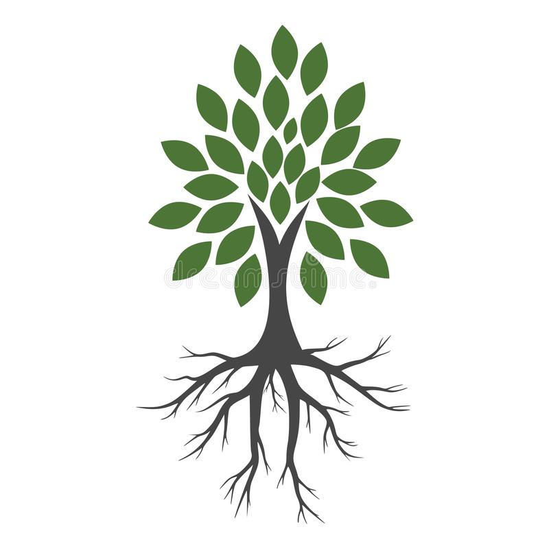 Tree And Roots icon, Tree And Roots logo. On white background royalty free illustration