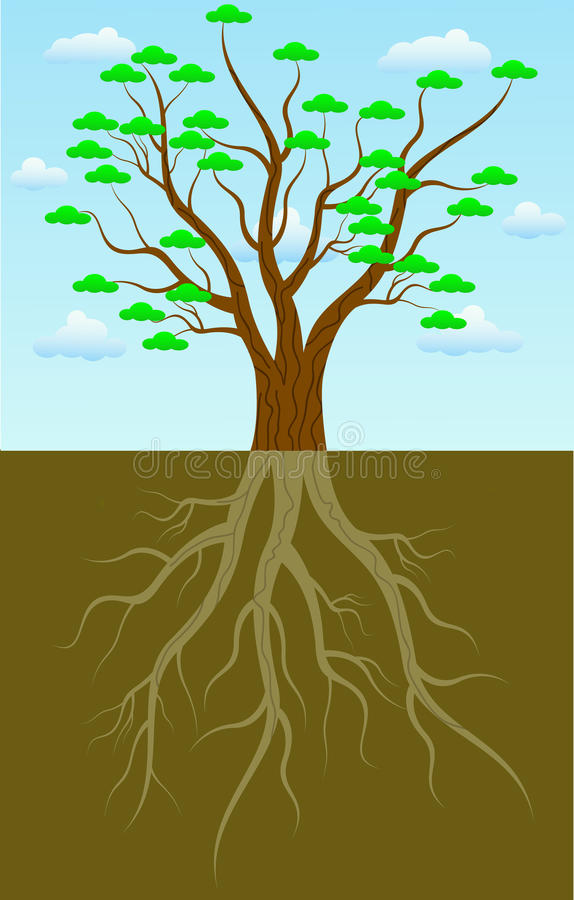 Tree roots vector illustration