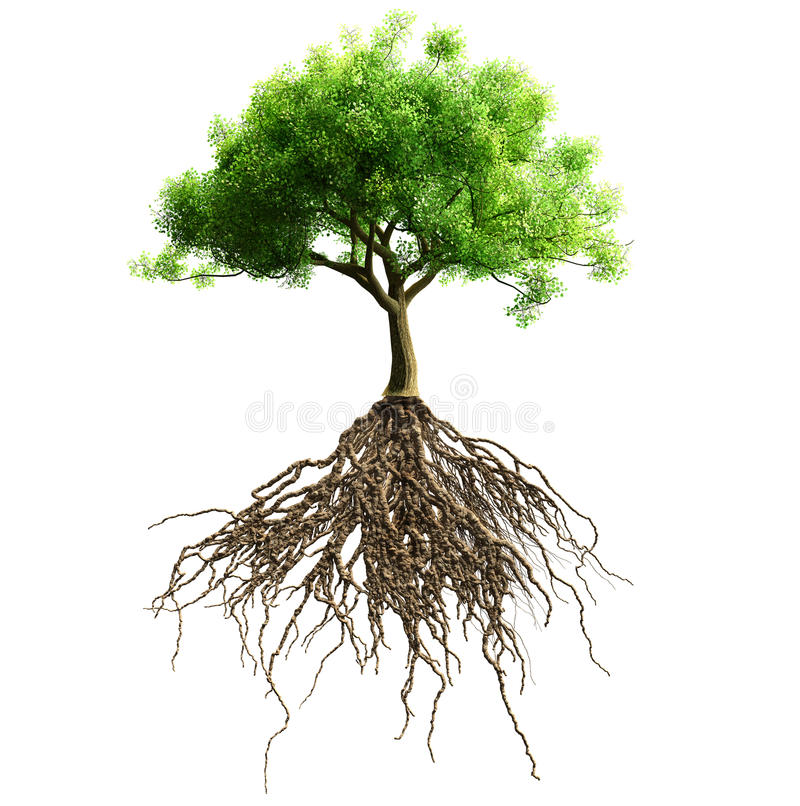 Tree with roots isolated. A tree with roots isolated. Isolation as additional in png format vector illustration