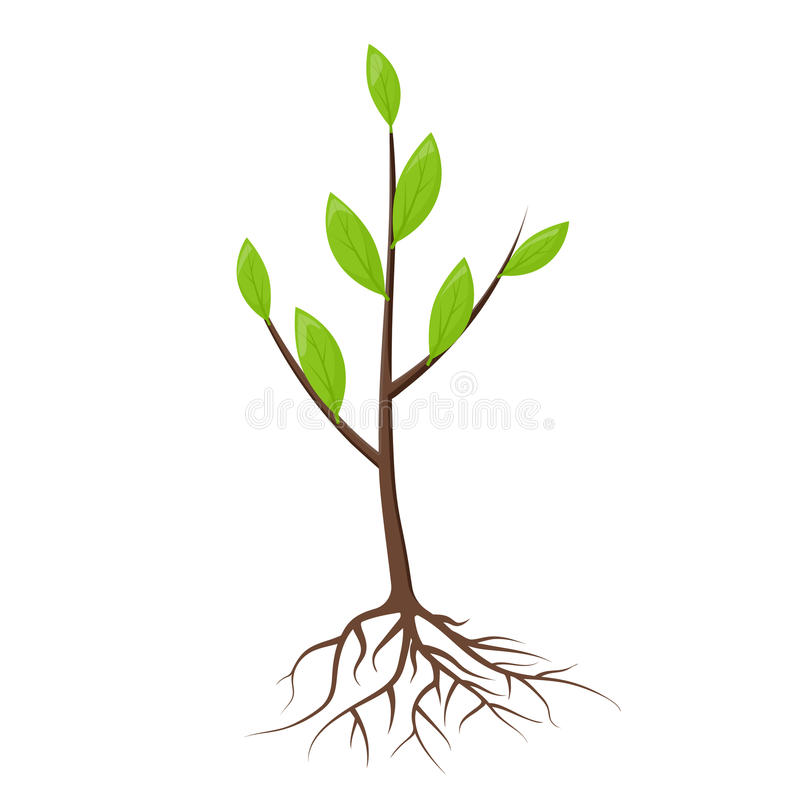 Tree with roots and leaves stock illustration