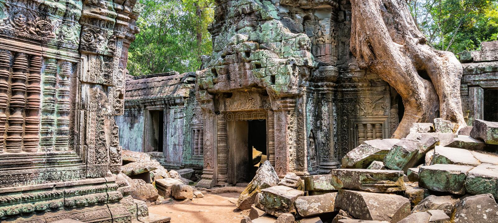 Tree roots over the beautiful Ta Prohm temple at Angkor, Siem Re stock image