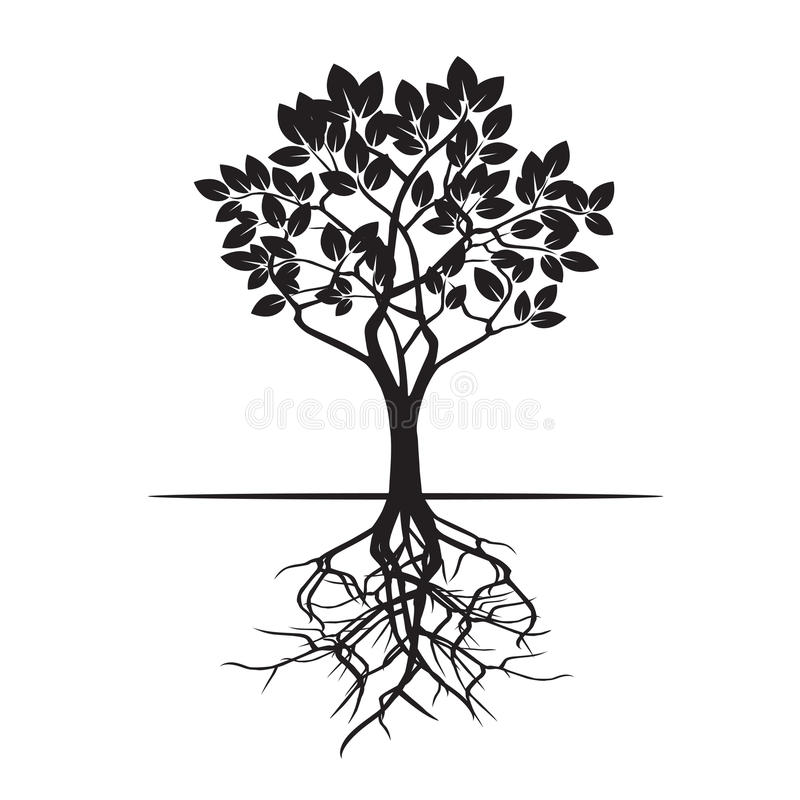 tree and roots vector illustration stock illustration rh dreamstime com transparent tree with roots vector transparent tree with roots vector