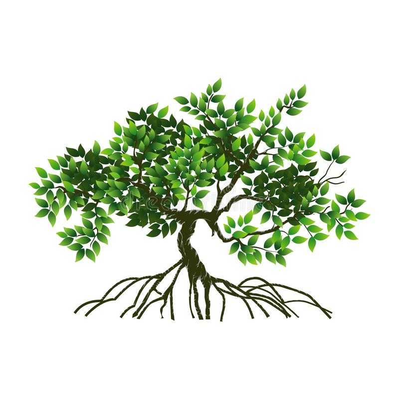 Mangrove Tree and roots vector illustration vector illustration