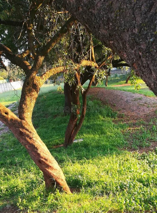 Tree row stock photo