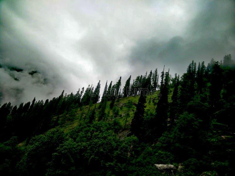 Tree& x27 s που μειώνει το λόφο στοκ εικόνα με δικαίωμα ελεύθερης χρήσης
