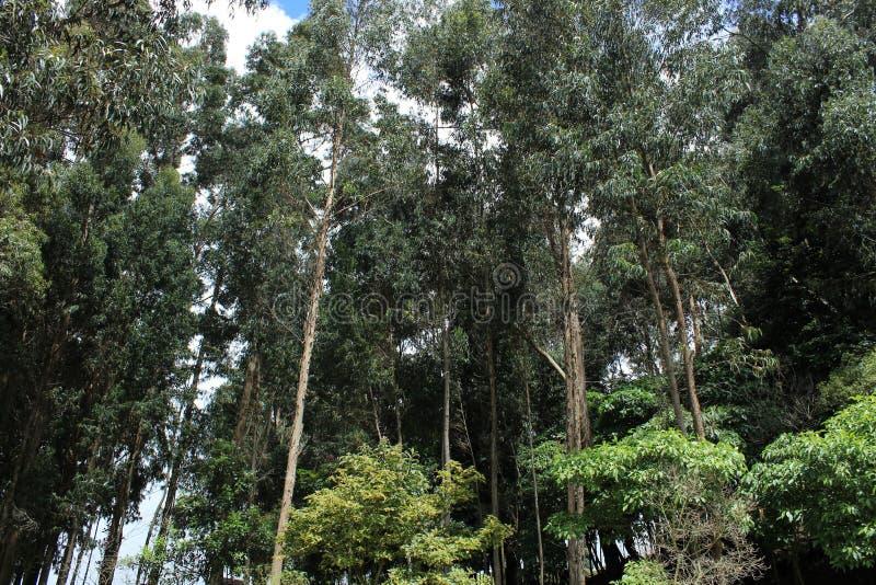 Tree& x27; s стоковое изображение