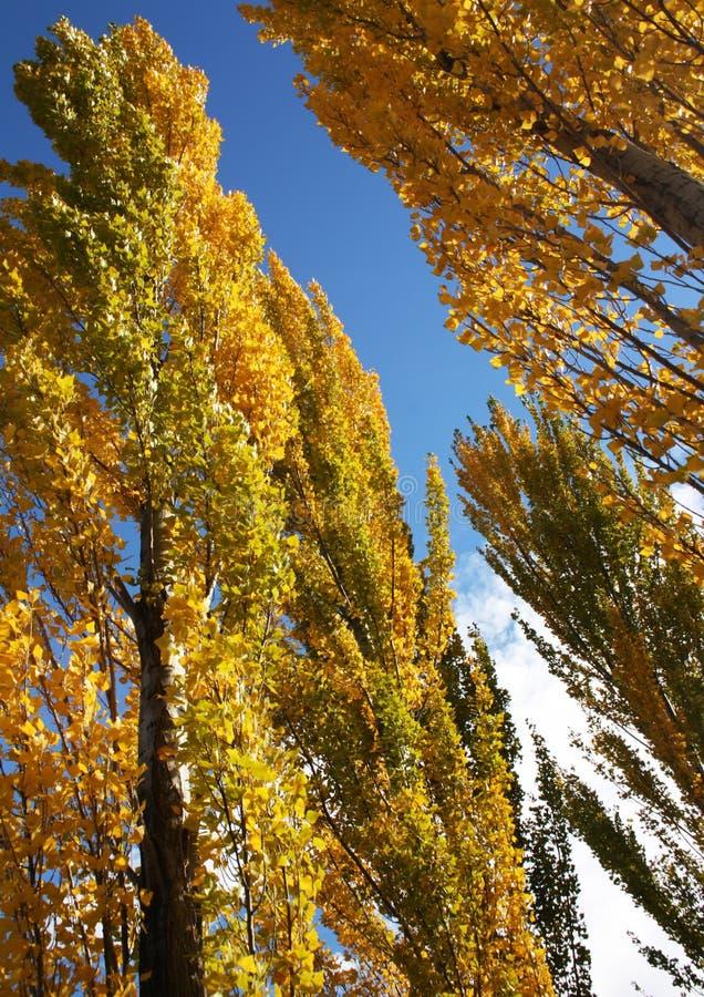 Tree s in Autumn
