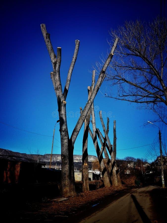 Tree& x27; s na cidade imagem de stock royalty free