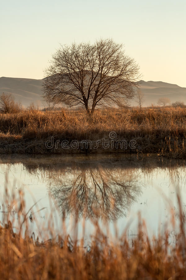 Tree and it`s reflection in a foggy pond. During early morning royalty free stock photo