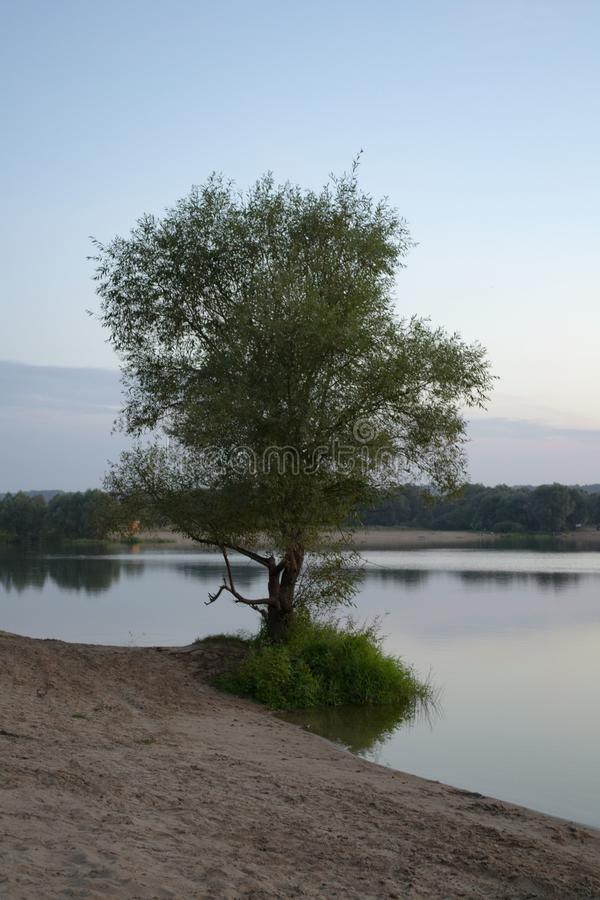 Tree on the sandy shore of the lake. Against the blue sky stock image