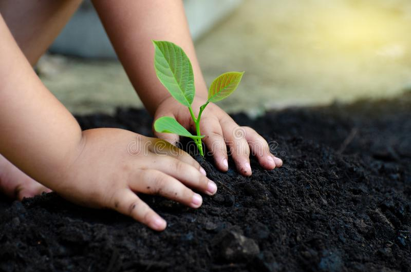 Tree sapling Baby Hand On the dark ground the concept implanted children consciousness into the environment. Tree sapling Baby Hand On the dark ground, the royalty free stock photos