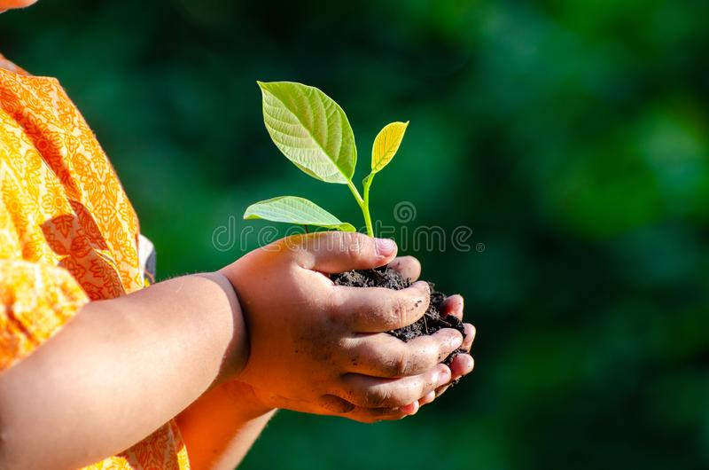 Tree sapling Baby Hand On the dark ground, the concept implanted children`s consciousness into the environment. Tree sapling Baby Hand On the dark ground, the stock photos