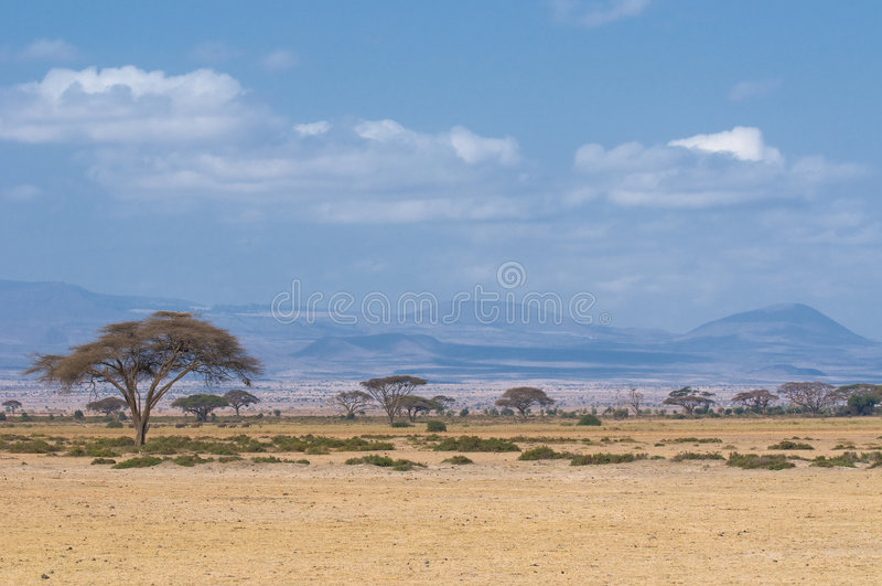 Tree in savannah, typical african landscape stock images