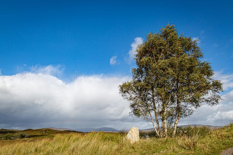 A Rural Scottish View. A tree in the Scottish countryside on a sunny late summers day stock photography