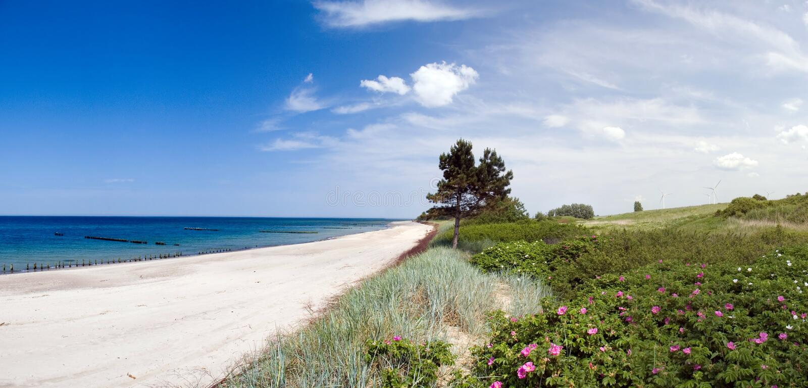 Download Tree at sea. stock photo. Image of beach, meadow, plant - 2553962