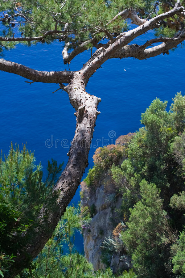 Download Tree On Sea Royalty Free Stock Photography - Image: 2840587