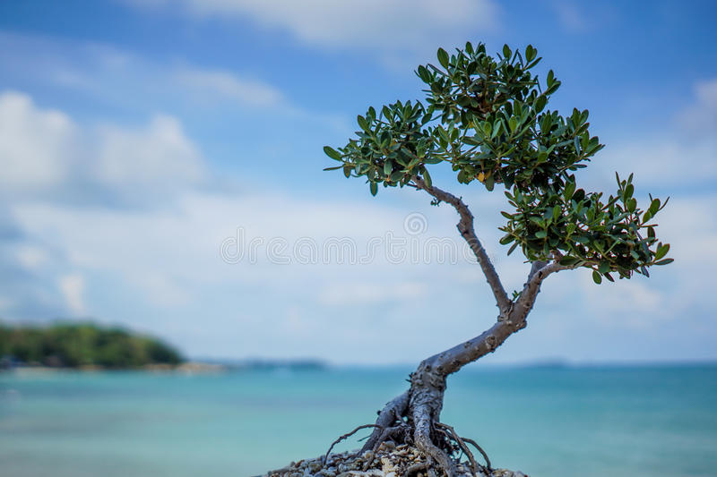 Tree and sea stock image