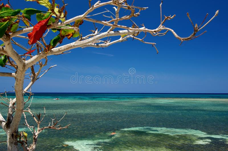 Tree and sea in Cuba royalty free stock photos