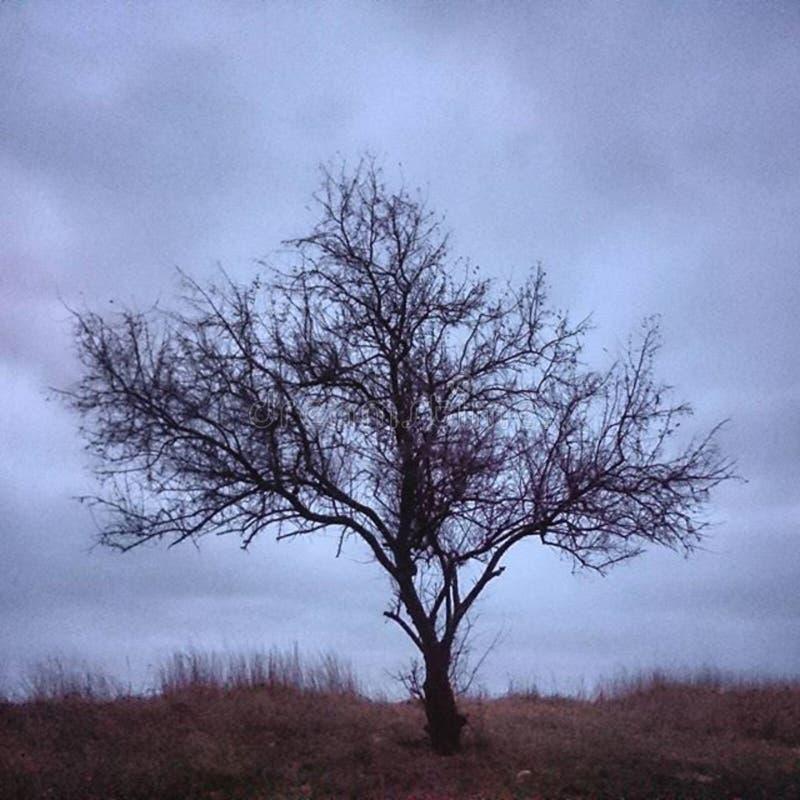 Tree on seashore stock image