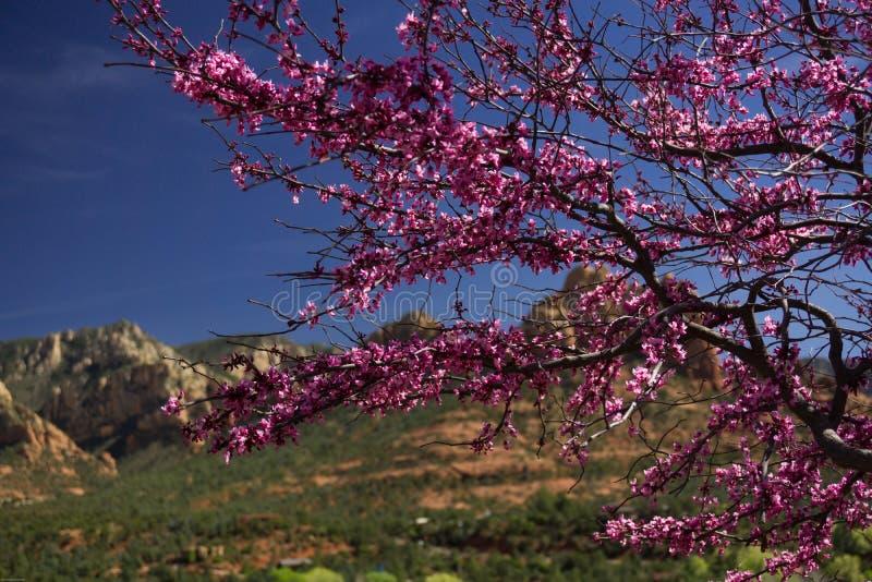 Tree in Sedona, Arizona stock image