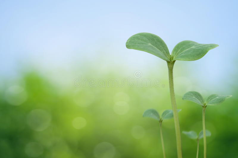 Tree seedling royalty free stock photos