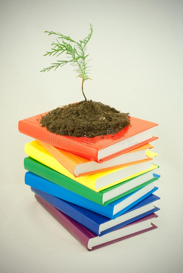 Tree seedling on the stack of books stock photography