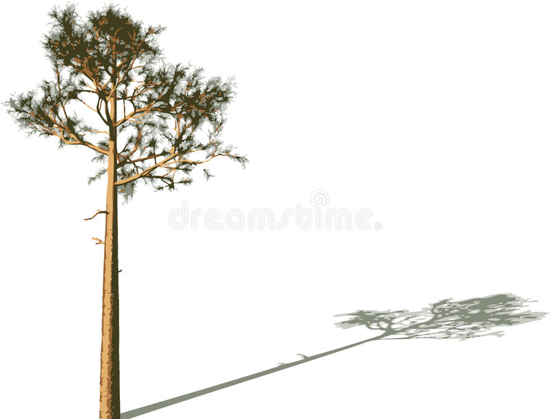 Download Tree with shadow. stock vector. Image of outside, leaf - 11302985