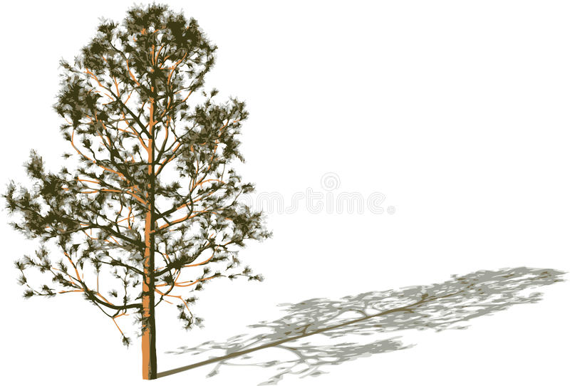 Download Tree with shadow. stock vector. Image of stencil, single - 11302988