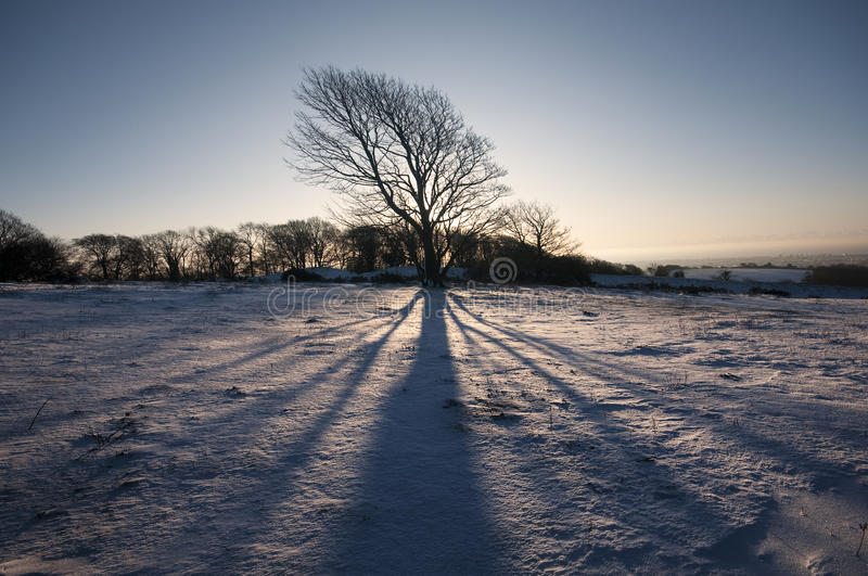 Download Tree shadow stock image. Image of shadow, scape, sunrise - 12243661