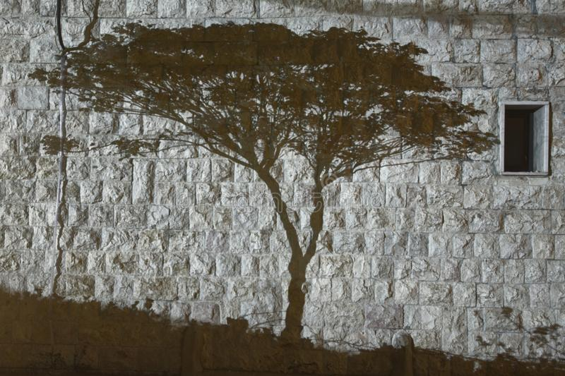 Tree shadow in black and white. The shadow of a tree painted by light on the side of a stone wall stock images