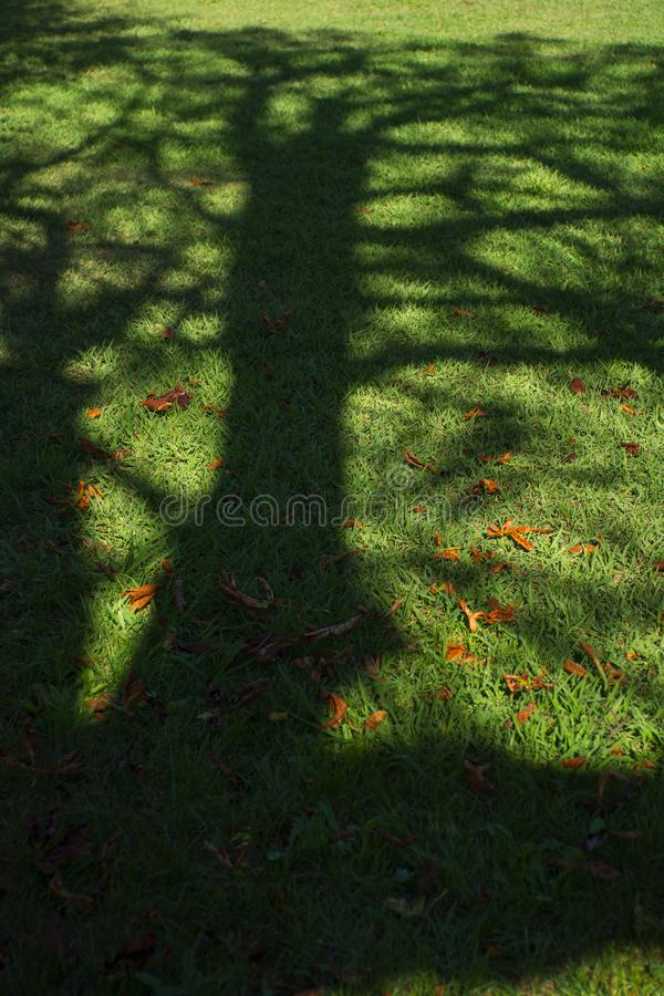 Tree shadow on a meadow royalty free stock photography
